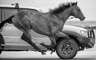 Конвертер лошадиных сил в киловатты